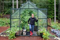 Growing Vegetables in a Greenhouse - Harvesting Tomatoes ...
