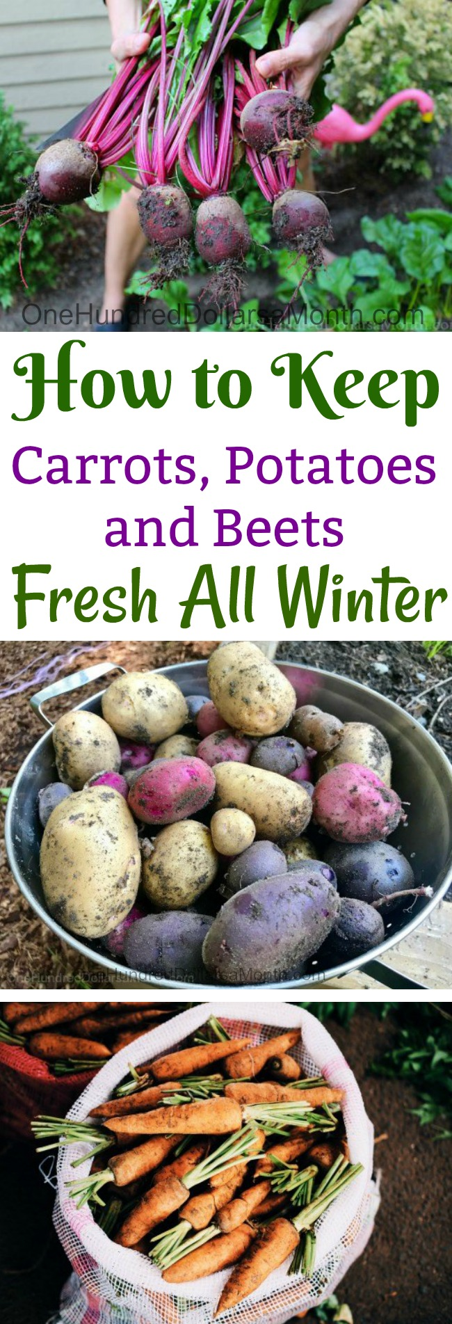How to store potatoes until spring