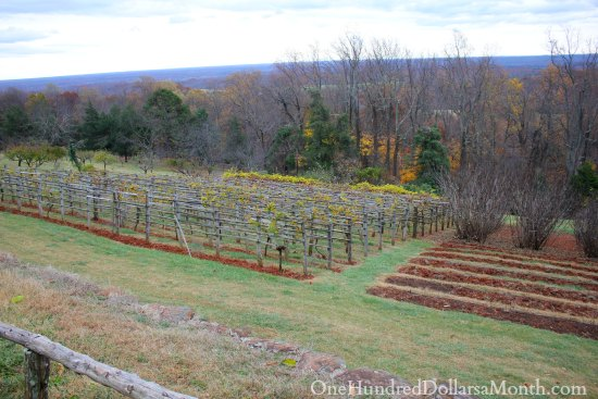 Thomas Jefferson's Monticello Orchard