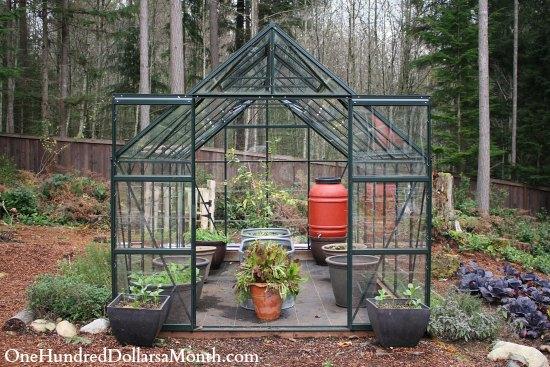 magnum glass greenhouse gardening