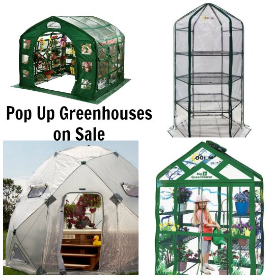 pop up greenhouse flower house