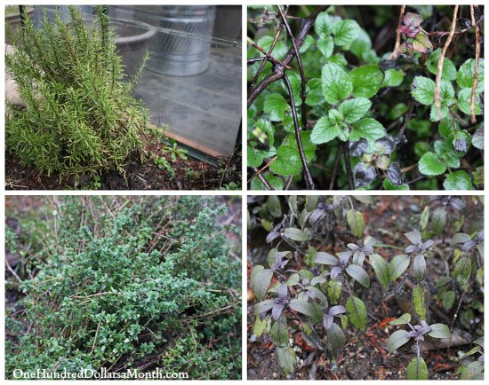 grow herbs in winter
