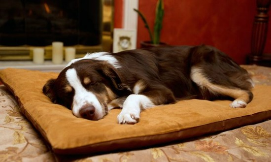 memory foam bed dogs