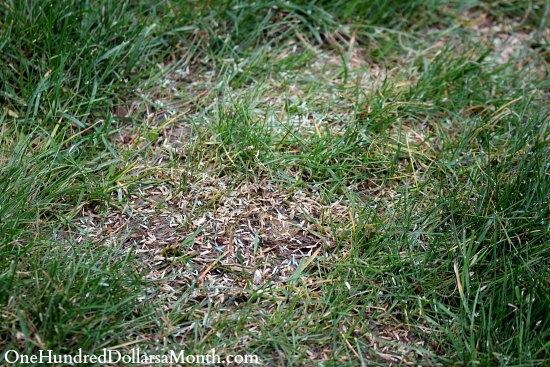Best Rake Small Leaves