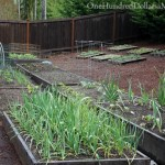 Mavis Butterfield | Backyard Garden Pictures 4/21/14