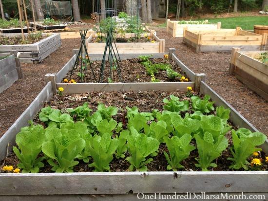 diy cedar garden boxes