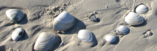 shells on beach