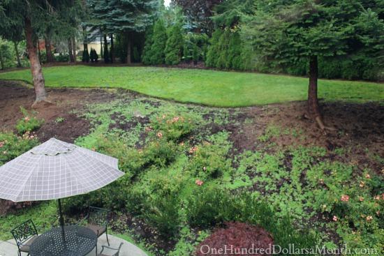 future garden pictures