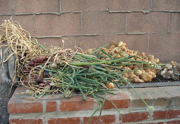 braided onions