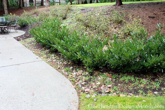 backyard garden in need of weeding