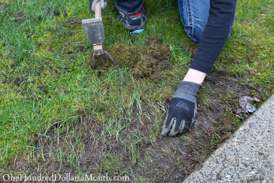 digging up moss