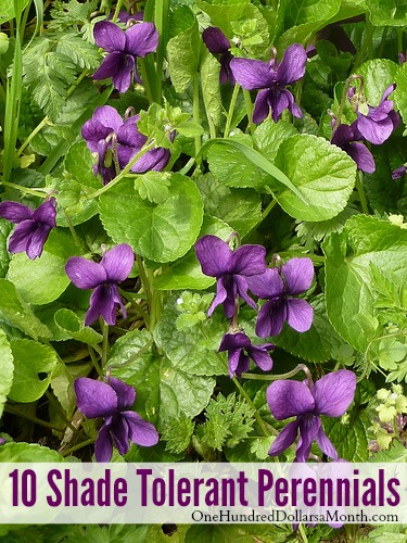 10 Shade Tolerant Perennials