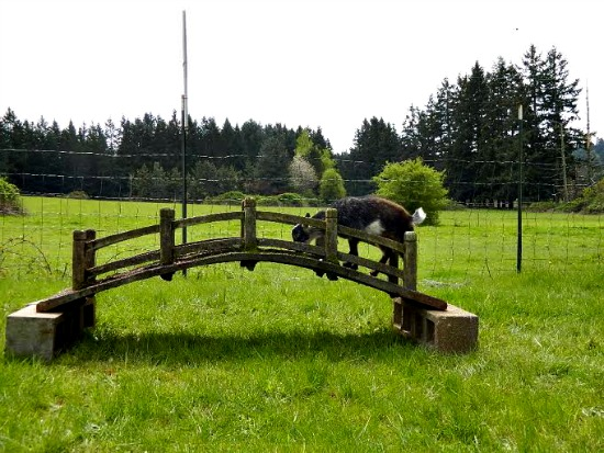 Abigail farm pictures2