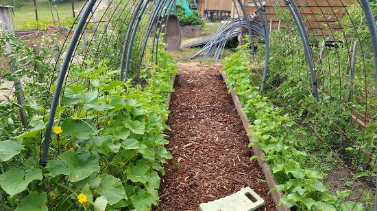 garden trellis design for cucumbers