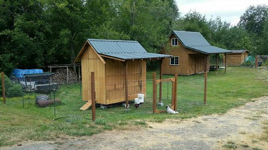 rustic chicen coop design