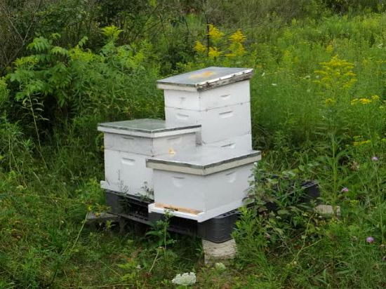 honey bee set up