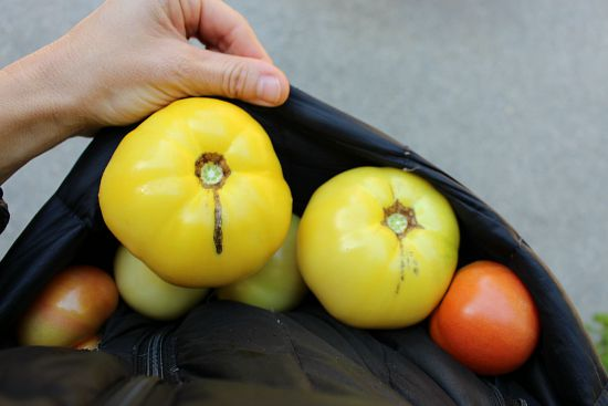 yellow taxi tomatoes