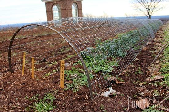 pea trellis monticello garden