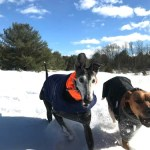 Heather From Massachusetts Shares Her Winter Storm Photos
