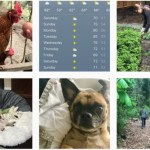 One Hundred Dollars a Month – Mavis' Weekly Highlights 5/20/17