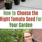 How to Choose the Right Tomato Seed For Your Garden