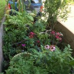 Mavis Mail – Heather from Massachusetts Checks In with Her Latest Gardening Projects