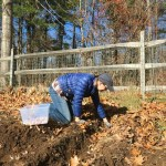 Last Minute Gardening in New England – Planting Garlic, Tulips Bulbs and Wishing We Had Ordered More Firewood!