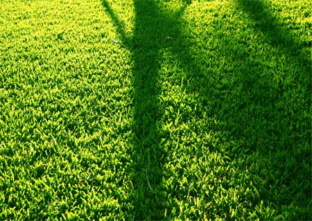 Shadows on the grass