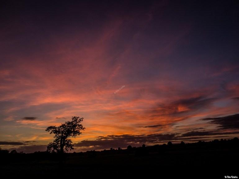 Tree Silhouette Sunset: Glorious Sky Tonight.