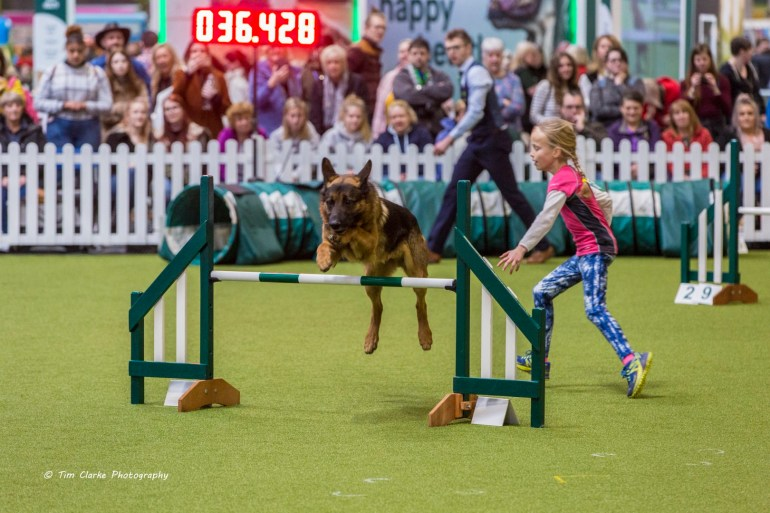 Junior Dog Agility at Crufts 2020.