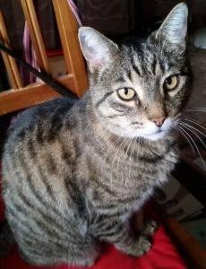 chalithor the cat oneshi press mascot Q&A