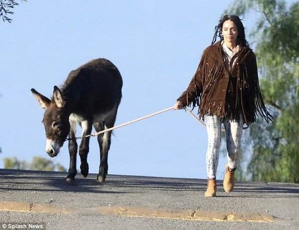 When you have a donkey as a pet and still have to walk it