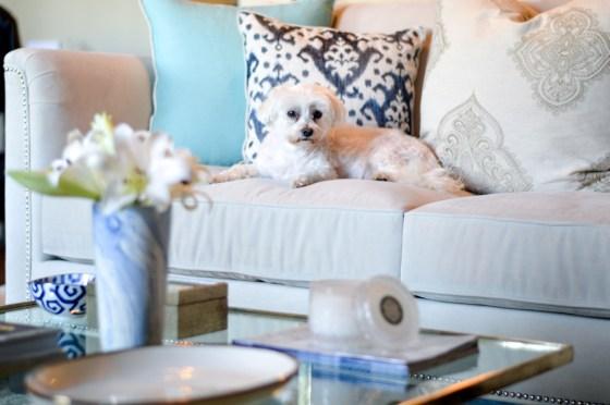 blue and white living room decor