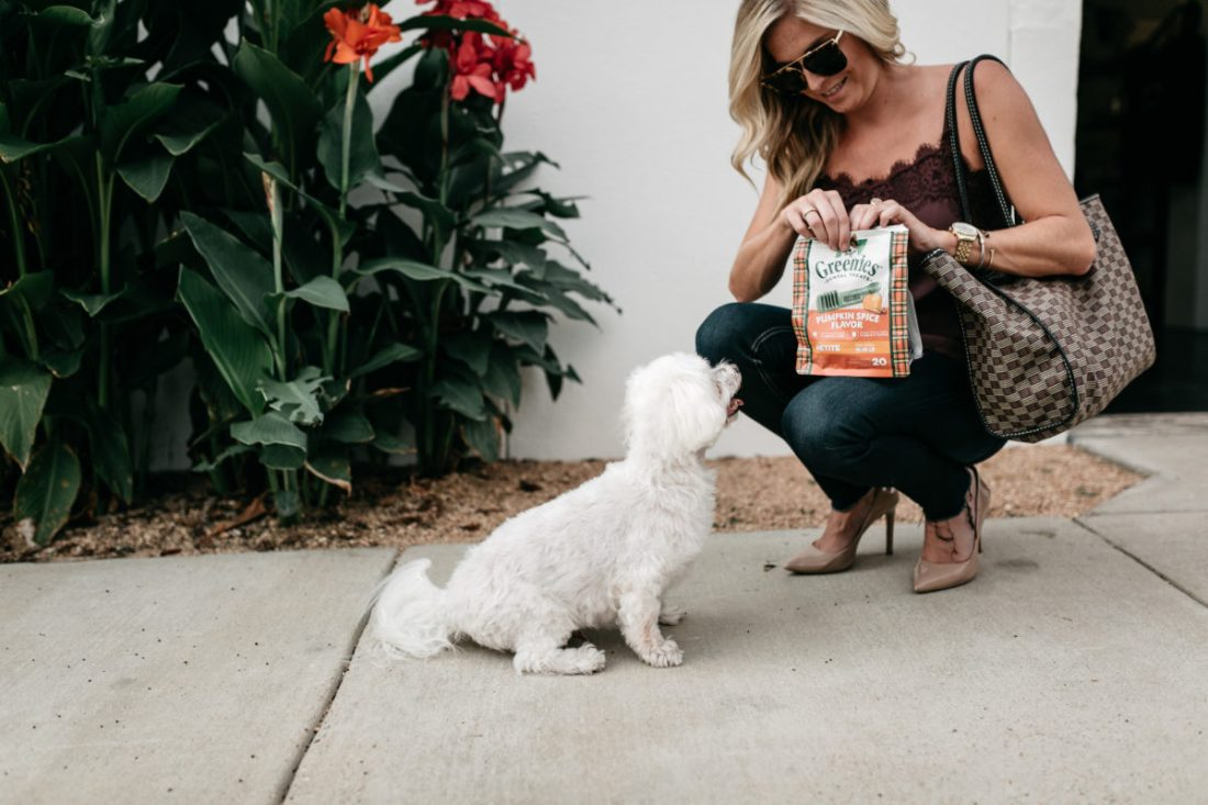 brooke burnett, dog treats, dog mom