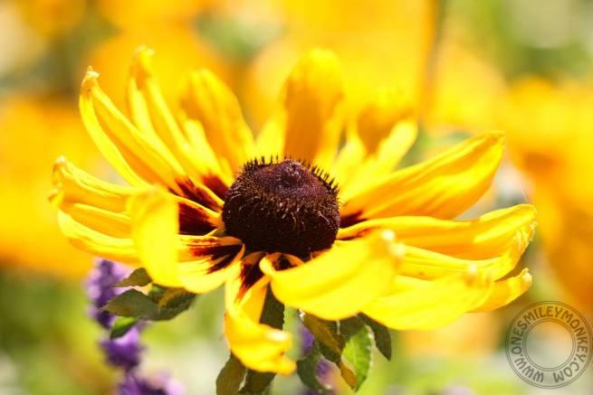 Queen Elizabeth Park Flower