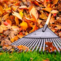 Tips for Lawn Care In Preparation for the Winter
