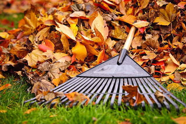 Tips For Fall Lawn Care In Preparation For Winter