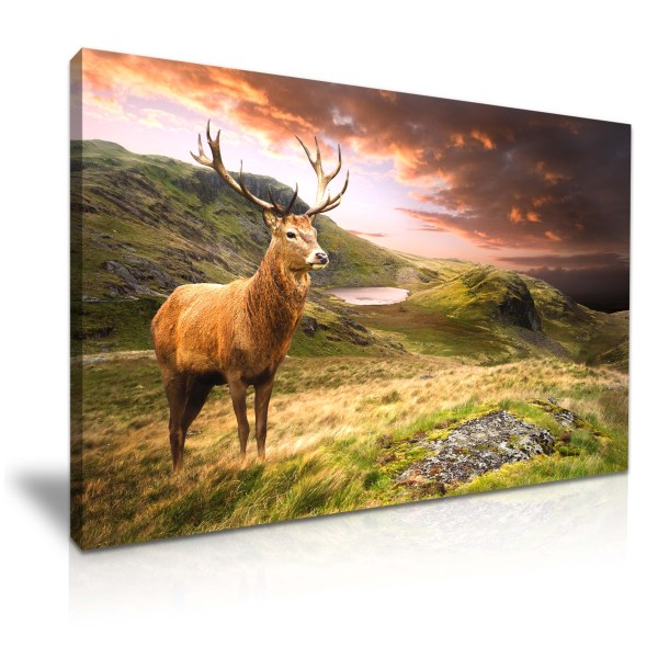 Animal Deer Stag Mountain Canvas Wall Art Print 76cmx50cm