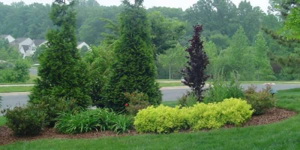 pin hyla sue garden ideas