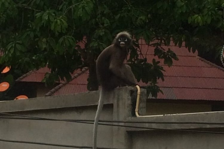 Tonsai, Thailand, Travel, monkey