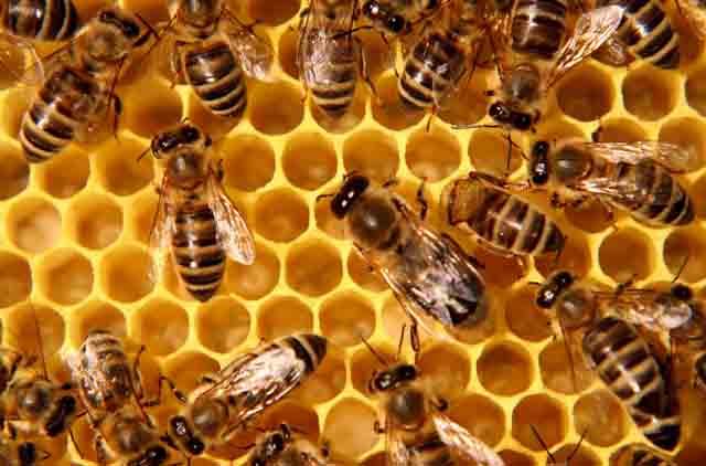 Pollinator population faces alarming decline!