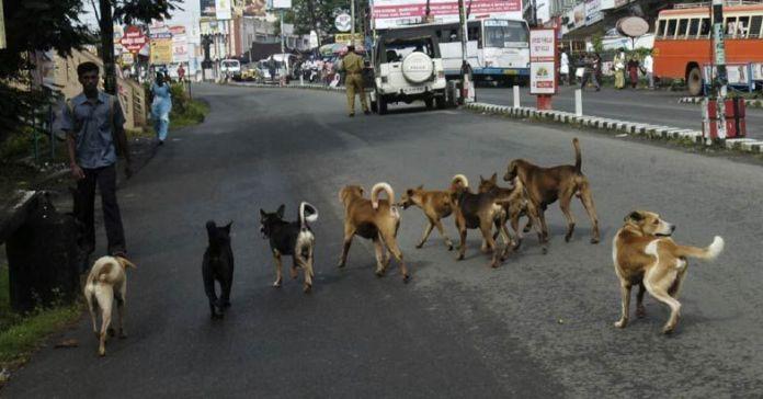 stray-dogs.jpg.image_.784.410