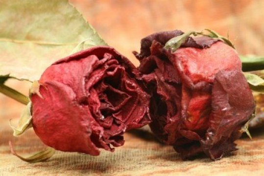 Dry flowers should not be kept in the house