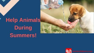 Help animals during summers e1557404787789