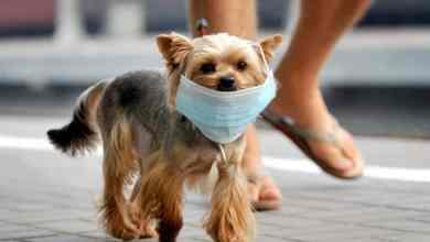 dog with mask