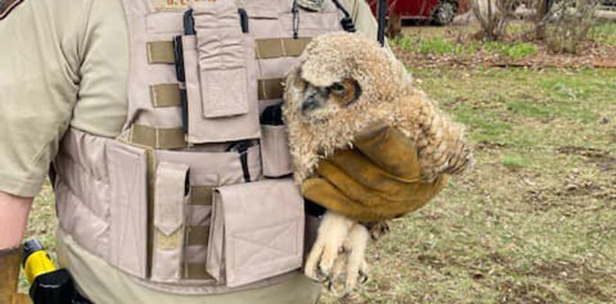 baby owl rat poison