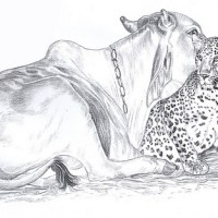 Stranger than Fiction-A Leopard and motherly Cow