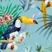 Hello Birdie, Bird Paradises in India