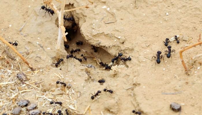 Last van file? Mieren niet!