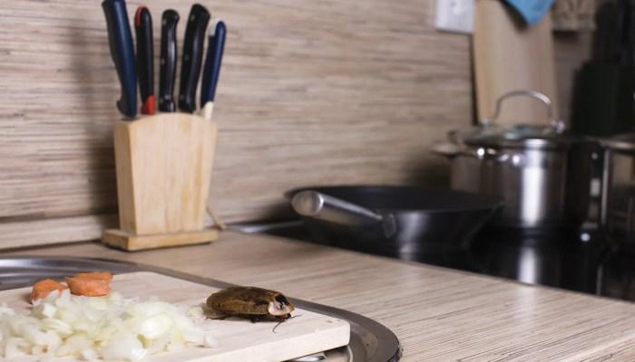 Kakkerlakkenprobleem voor Gordon Ramsay